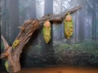Bozzoli – Alba nel Bosco / Cocoons – Dawn in the forest